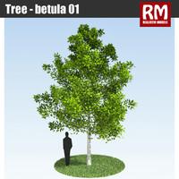 Tree - betula 01