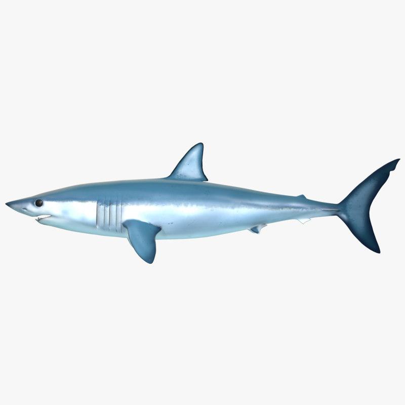 3d shark modeled