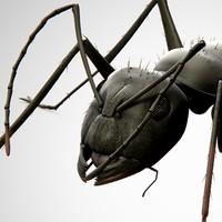 3d model ant