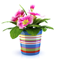 flower pot 3d 3ds