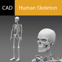 Solidworks CAD Skeleton Poseable