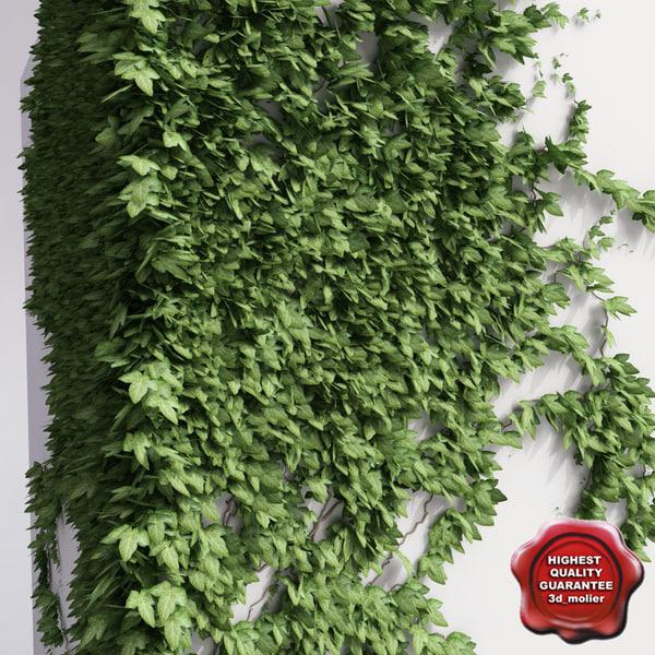 max wall ivy v3