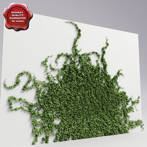 max wall ivy v6
