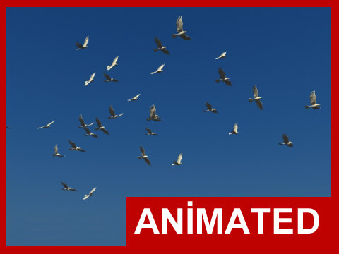 3d realistic flying bird flock