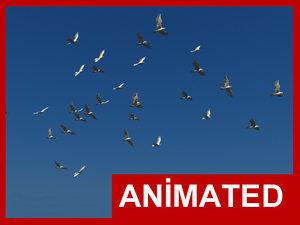 3d realistic flying bird flock