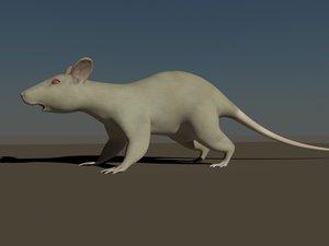max white rat