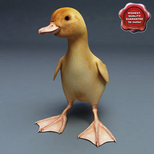 3d duckling pose1 model