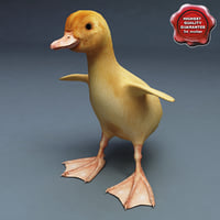 duckling static 3d model