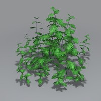 3d model perennial weed plant