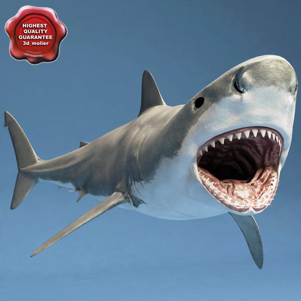 shark rigged 3d model