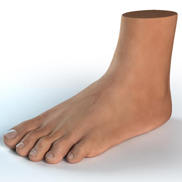 human foot 3d model