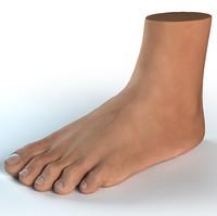 Foot Human