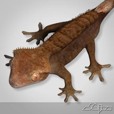 3d gecko rhacodactylus lizard geko model