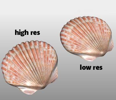 maya sea shell