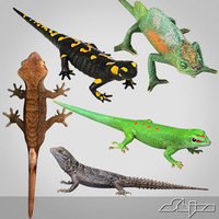 Lizards collection