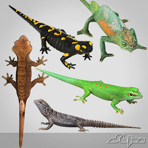 gecko lizard 3d max