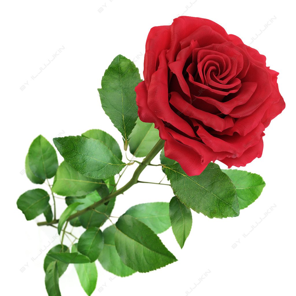 3d flowers red rose