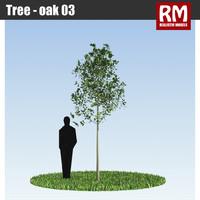 Tree - oak 03