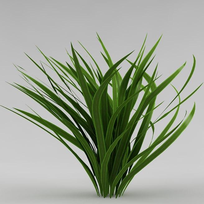 bush garden plant 3d model