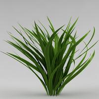 bush_41_garden plant