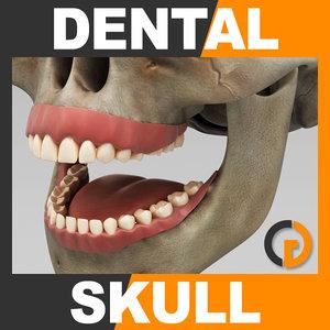 human dental skull - 3d 3ds