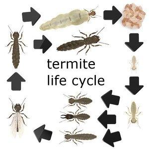 termite life 3d 3ds
