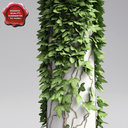 column with ivy 3D models