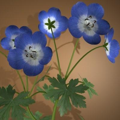 3ds geranium flower pot plants