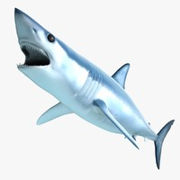 Mako Shark (Animated)