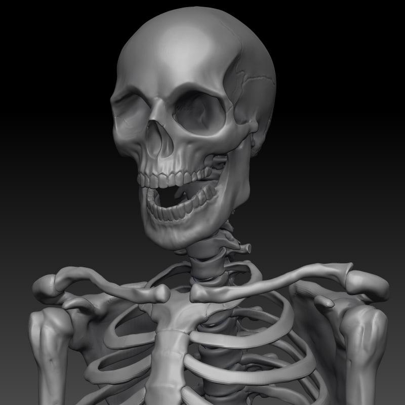 c4d male skeleton