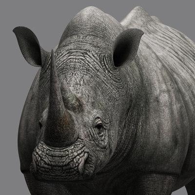 3d rhino model