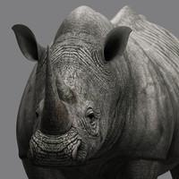 Rhino(1)