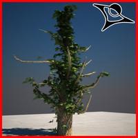 max ivy tree