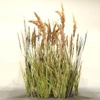 Grass_25
