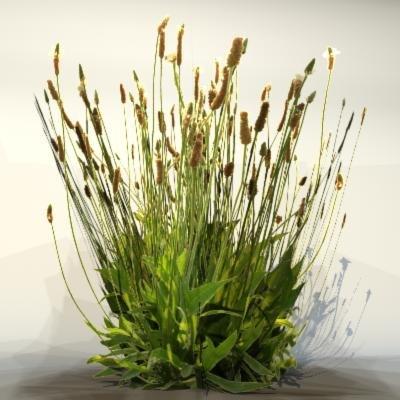 3d pc grass
