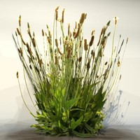 Grass_27