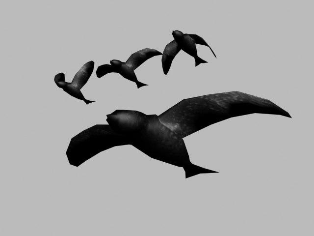 crow bird max
