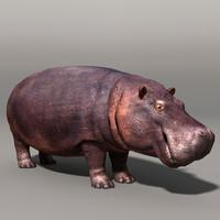 max hippopotamus hippo