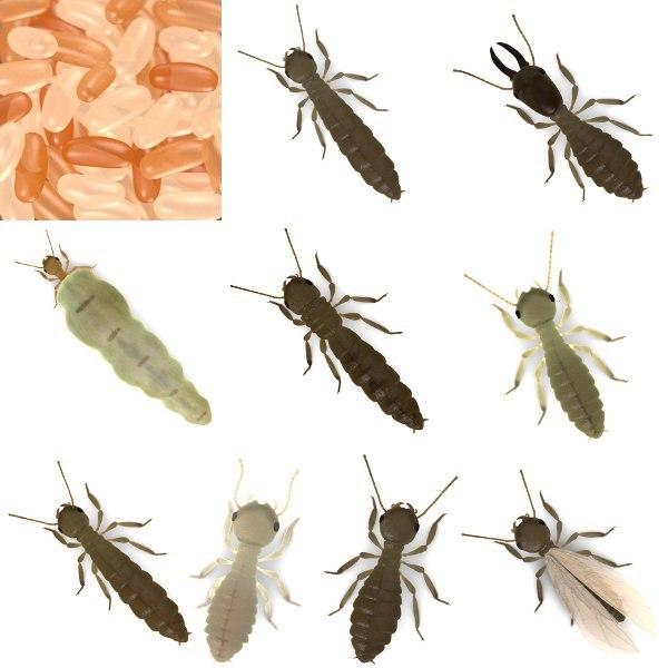 3d model of termite