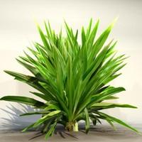 Grass_32