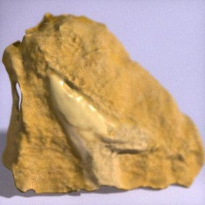 fossilized sharks tooth 3d model