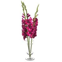 gladiolus elegant flower 3d model