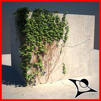 Ivy Corner