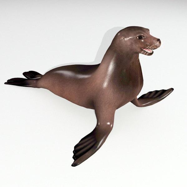 sea seal 3d model