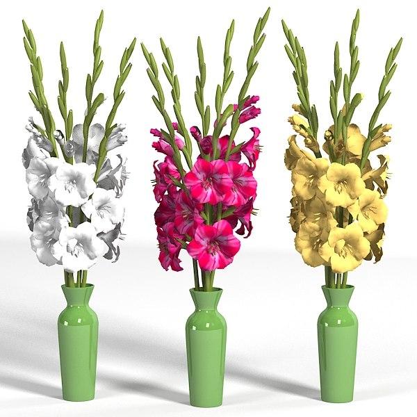 3d Model Of Gladiolus Elegant Flower