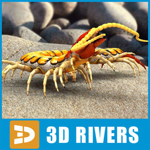 3d scolopendra insects bug