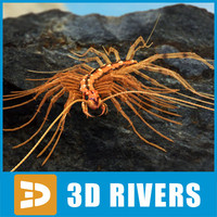 Scutigera coleoptrata by 3DRivers