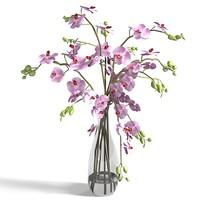 orchid flower lilies 3d 3ds