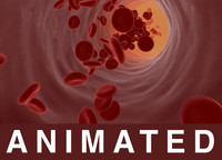 Blood vessel red blood cells animated