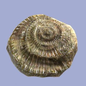 3ds max ammonite fossil